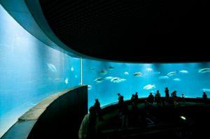 ディナー+水族館に行く