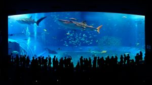 夜の水族館デートの心得
